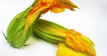 fiori-di-zucca