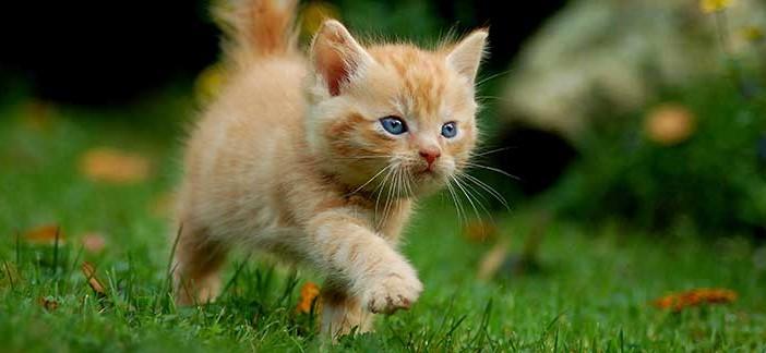 Miaolino gatto curioso